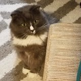 Photo for Sitter Needed For 1 Cat In Durham