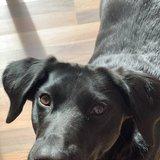 Photo for Walker Needed For 1 Dog In Charlotte