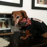 Photo for Housekeeper Needed For 2 Bed, 1 Bath Home In Avondale, Chicago. I Have 1 Small Senior Dog And A Cat.