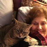 Photo for Looking For A Pet Sitter For 1 Cat In New Milford