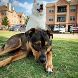 Photo for Pet Sitter Needed For 2 Dogs, 2 Cats In Dallas 10 Days Over Christmas