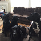 Photo for Sitter Needed For 4 Dogs In Suwanee