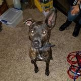 Photo for Walker Needed For 1 Dog In Kissimmee