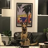 Photo for Monday-Friday Dog Walker