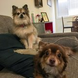 Photo for Sitter Needed For 2 Dogs In Los Angeles