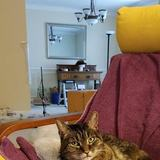 Photo for Well Versed In Cat Behavior, Loves Cats, Knows How To Give Medication Without Stressing The Cat