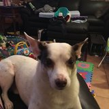 Photo for Walker Needed For 1 Dog In North Andover