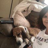 Top 10 Pet Care Jobs Hiring Near Me (Free to Apply) - Care com