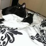 Photo for Looking For A Pet Sitter For 1 Cat In Canoga Park