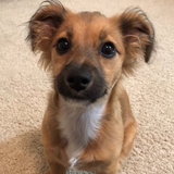 Photo for Pick Up My Puppy And Bring Home