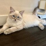 Photo for Sitter Needed For 1 Cat In Seattle