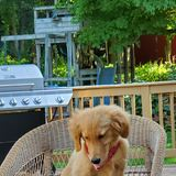 Photo for Looking For A Pet Sitter For 1 Dog In Danbury