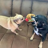 Photo for Looking For A Pet Sitter For 2 Dogs, 1 Bird In Clearwater
