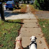 Photo for Looking For A Pet Sitter For 2 Dogs In Woodbridge