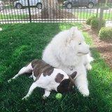 Photo for Sitter Needed For 1 Dog In Aspen