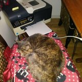 Photo for Sitter Needed For 1 Cat In Wheat Ridge