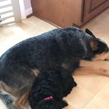 Photo for Sitter Needed For 2 Dogs In Plymouth