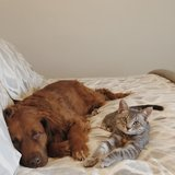 Photo for Looking For A Pet Sitter For 1 Dog, 1 Cat In Rochester