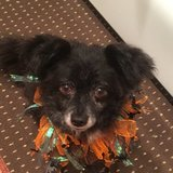 Photo for Looking For A Pet Sitter For 1 Dog In Oceanside
