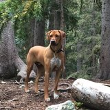 Photo for Sitter Needed For 1 Dog In Colorado Springs
