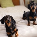 Photo for Two Dachshunds In Need Of A Sitter