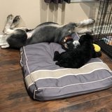 Photo for Looking For A Pet Sitter For 4 Dogs In Corpus Christi