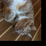 Photo for Looking For A Pet Sitter For 1 Cat In New Port Richey