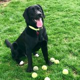 Photo for Walker Needed For 1 Dog In Watertown