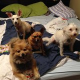 Photo for Sitter Needed For 4 Dogs In Richmond