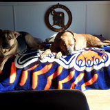 Photo for Pet Sitter For Vacation