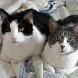Photo for Sitter Needed For 2 Cats In Schaumburg