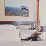 Photo for Looking For A Pet Sitter For 2 Dogs In Avondale
