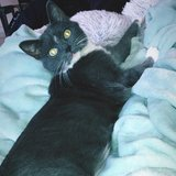 Photo for Looking For A Pet Sitter For 1 Cat In DeKalb