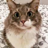 Photo for Looking For Experienced Cat Sitter For 1 Cat In Naperville