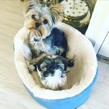 Photo for Sitter Needed For 2 Dogs (Monday-Thursday)