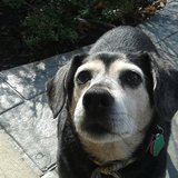 Photo for Walker Needed For 1 Dog In Upper Magungie On Mondays And Wednesdays