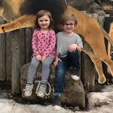 Photo for Sitter Needed For 2 Dogs, 1 Fish In Rochester