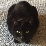 Photo for Looking For A Pet Sitter For 1 Cat In Aurora