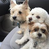 Photo for Looking For A Pet Sitter For 3 Dogs In Omaha