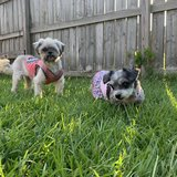 Photo for Sitter Needed For 2 Dogs In Mobile