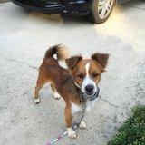 Photo for Walker Needed For 1 Dog In Lanham
