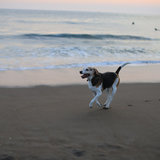 Photo for Sitter Needed For 2 Dogs In Novato - Need Help Over The Holidays!