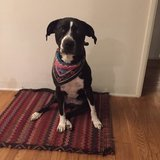Photo for Sitter Needed For 1 Dog In Eagle Rock, Los Angeles
