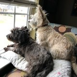Photo for Walker Needed For 2 Dogs In Burlington