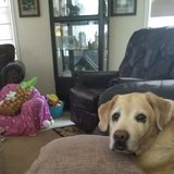 Photo for Looking For A Pet Sitter For 2 Dogs In Burlington