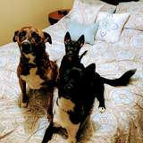 Photo for Sitter Needed For 3 Dogs