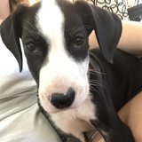 Photo for Puppy Sitter Needed