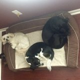 Photo for Looking For A Pet Sitter For 3 Dogs In Denver
