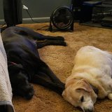 Photo for Sitter Needed For 2 Dogs In Columbia-*Insulin Injection Experience Preferred*