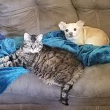 Photo for Looking For A Pet Sitter For 1 Dog, 1 Cat In Oak Harbor